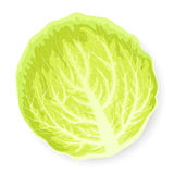 Green cabbage leaf Royalty Free Stock Images