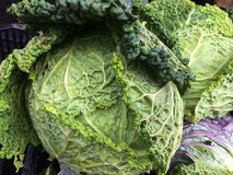 Green cabbage or savoy cabbage at the farmers Market Royalty Free Stock Photography