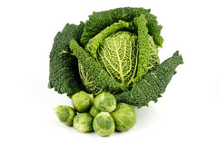 Green Cabbage and Sprouts Stock Photo