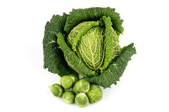 Green Cabbage and Sprouts Stock Photography