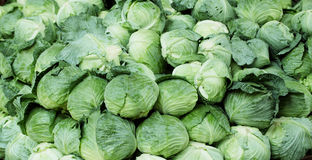 Green cabbages Stock Photo