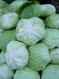Green Cabbages Background Stock Photography