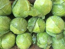 Green cabbages Royalty Free Stock Images
