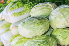 Green cabbages and lettuces Royalty Free Stock Image
