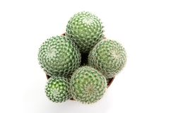 Green Cactus Stock Images