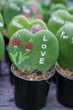 Green cactus as heart Stock Photography