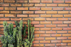 Green cactus on brick wall Stock Images
