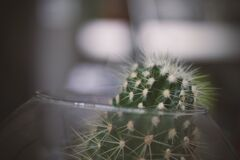 Green Cactus on Clear Glass Bowl Royalty Free Stock Photo