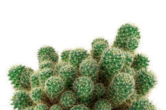 Green cactus close up. Isolated on a white background Stock Photos