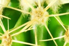 Green cactus closeup Royalty Free Stock Photos