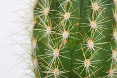 Green cactus detail Royalty Free Stock Images