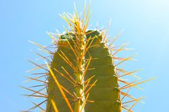 Green cactus drows Royalty Free Stock Photo