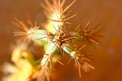 Green cactus drows Royalty Free Stock Photography