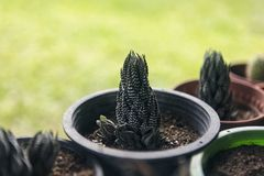 Green cactus in flowerpot. On green blurred background royalty free stock photos