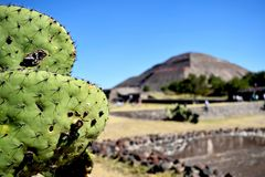 Green cactus in front of pyramid stock photos