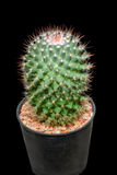 Green cactus. Cactus isolated on black background Stock Images