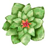 Green cactus with orange flowers, hand drawn watercolor illustration stock illustration