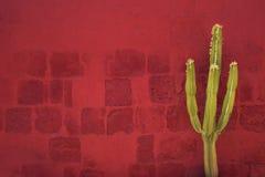 Green Cactus over red wall, Santa Catalina Monastery, Arequipa Stock Photo