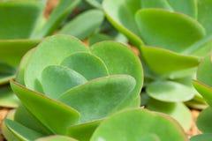 Green cactus plant Stock Photos