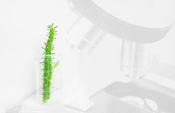 Green cactus plant in beaker science glassware on microscope bac Stock Photos