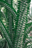 Green cactus plant Stock Photos