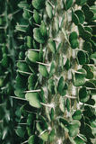 Green cactus plant Royalty Free Stock Photo