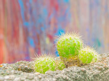 Green cactus planting on wall hole Royalty Free Stock Photography