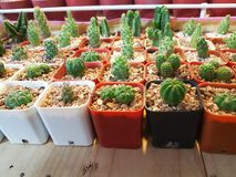 Green cactus stock image