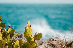 Green cactus in a rock along the coastline royalty free stock images
