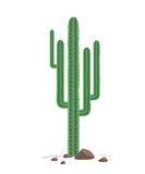 The green cactus on a rocky Texas soil isolated on white background Royalty Free Stock Photos