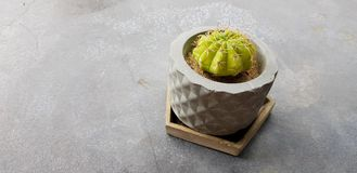 Green cactus in stone flowerpot on gray concrete table. With copy space - Growth plant and Decoration concept stock photos
