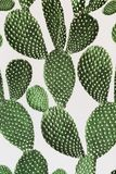 Green cactus surface. Use for texture or background stock images