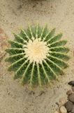 Green cactus tree. On sand floor stock photos