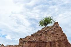 Green cactus and tree on top of sandy rock and blue cloudy sky Stock Photography