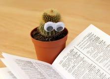 Green Cactus Beside White Book Stock Photos