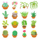 Green cactuses icons set, cartoon style Royalty Free Stock Photos