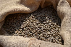 Green coffee beans in a burlap. Royalty Free Stock Images