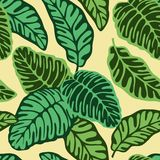 Green calathea leaves tropical seamless pattern royalty free illustration