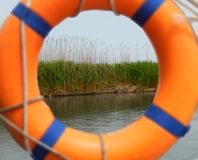 Green cane plant appears through lifebuoy in the river royalty free stock photography
