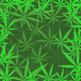 Green Cannabis Leaves Background Royalty Free Stock Photography