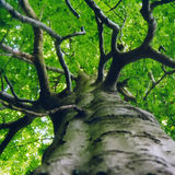 Green Canopy Stock Photography