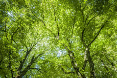 Green Canopy Stock Images
