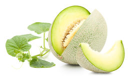 Green cantaloupe melon isolated Royalty Free Stock Photography