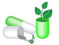 The green capsules with medicinal powder Royalty Free Stock Photo