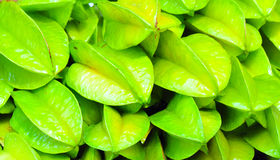 Green carambolas Stock Images