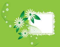 Green card with daisies Royalty Free Stock Photography
