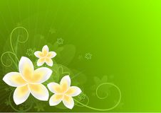 Green card with flowers. And place for your text Royalty Free Stock Photos