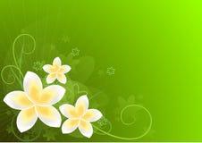 Green Card mit Blumen Lizenzfreie Stockfotos