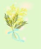 Green Card mit Mimose Lizenzfreies Stockfoto
