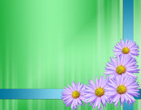 Green card with violet flowers and ribbons. Green card with violet flowers Stock Photography